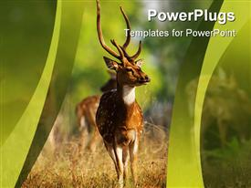 PowerPoint template displaying male spotted deer in field, green wave border