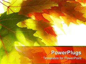 PowerPoint template displaying close-up of maple leaves against white background
