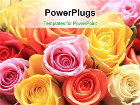 PowerPoint template displaying mixed rose bouquet of different colors in the background.