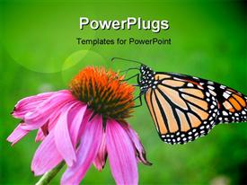 PowerPoint template displaying a butterfly on the flower with greenish background and place for text