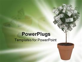 PowerPoint template displaying small money tree in terra cotta pot  on green and white background