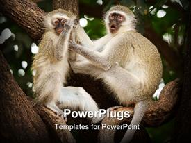 Vervet (Green) monkeys (Cercopithecus aethiops) in the Kruger National Park presentation background