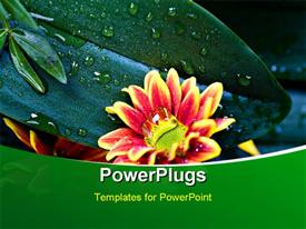 PowerPoint template displaying close up of green leaf after morning dew with water droplets