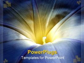 Morning glory in vivid blue and yellow presentation background