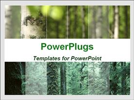 PowerPoint template displaying forest and trees. Ideal for presentations on nature, environment, etc in the background.