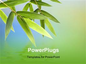 PowerPoint template displaying bamboo leaves with reflection on water surface