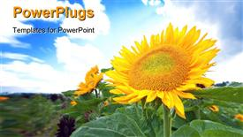 Beautiful big sunflower head in a farm powerpoint design layout