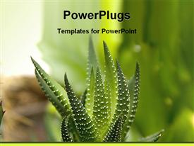 Beautiful green cactus powerpoint template