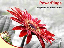 PowerPoint template displaying a beautiful flower with rocks in the background