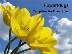 Blooming yellow tulips template for powerpoint