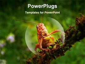 PowerPoint template displaying a grasshopper magnified with greenery in the background