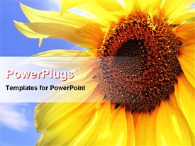 Close view of sunflower powerpoint theme