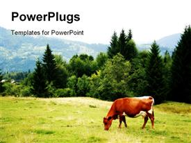 Green meadow in mountains and cow powerpoint theme