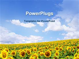 Sunflower template for powerpoint