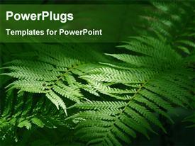 Sunlight falling on fern leaves powerpoint theme