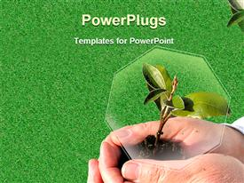 PowerPoint template displaying ecology metaphor with hand protecting plant, green grass, ecology, sustainable