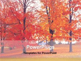 View of a maple tree garden template for powerpoint