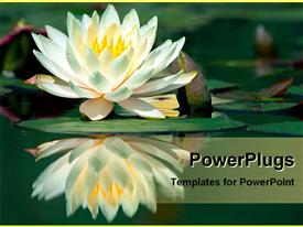 Water lily reflecting in water template for powerpoint