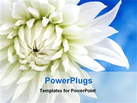 White flower is blooming powerpoint design layout