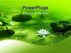 PowerPoint template displaying water lily and duckweed in green pond