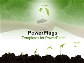 PowerPoint template displaying stages of growth of plant on shades of green