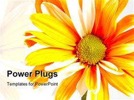 PowerPoint template displaying orange painted daisy flower in the background.