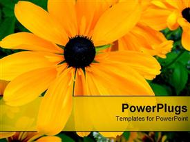 PowerPoint template displaying orange flower in the background.