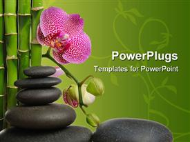 PowerPoint template displaying a stack of smooth pebles with a pink flower