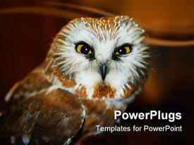 PowerPoint template displaying owl watching directly into focus on faded dark brown background