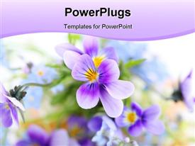 PowerPoint template displaying nature concept, using flowers of purple color