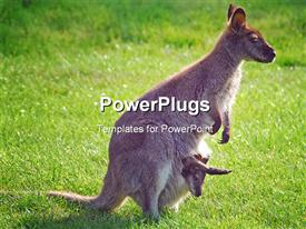 PowerPoint template displaying adult kangaroo female with baby in her pouch with green garden