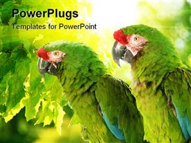 Cute Colorful Tropical Parrots In The Wild template for powerpoint