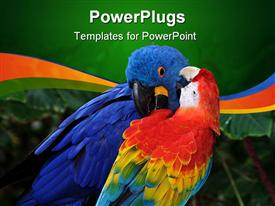 This red macaw seems to be telling the big boy (blue macaw) a thing or two powerpoint design layout