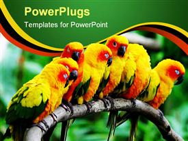 PowerPoint template displaying a group of parrots together with blurred background
