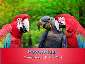 Three colorful parrots meeting together presentation background