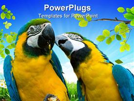 Two beautiful yellow and blue parrots in love powerpoint theme
