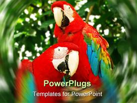 Two colorful parrots in the park or jungle sitting on a tree branch template for powerpoint