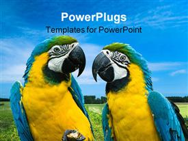 Close-up of a beautiful blue-and-yellow macaw's in love powerpoint template