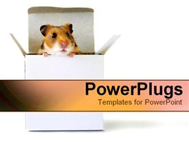 PowerPoint template displaying little hamster in a box in the background.