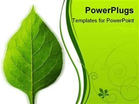 PowerPoint template displaying a beautiful green leaf and the place for text on the other side