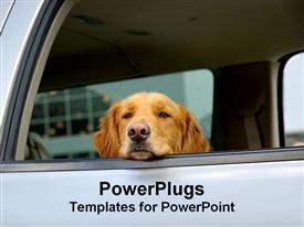 Golden Retriever puts his head out the window of a car powerpoint design layout