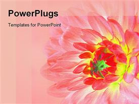 Beautiful pink flower powerpoint theme