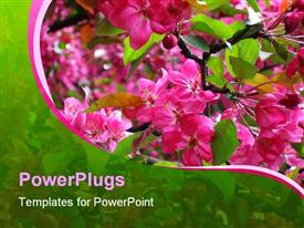 PowerPoint template displaying a collection of pink flowers with their reflection in the background