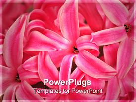 PowerPoint template displaying close up of flowers with blurred background