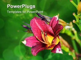 PowerPoint template displaying beautiful blooming red water lily lotus flower with green leaves in the pond