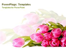 PowerPoint template displaying plain white background with bright pink tulips