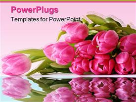 PowerPoint template displaying laying Bouquet of Pink Tulips in the background.