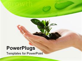 PowerPoint template displaying female hand holding plant with dirt with green and white background, ecology, sustainable, earth friendly