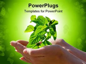 Plant in woman hands powerpoint theme