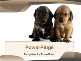 Two cute puppies brothers template for powerpoint